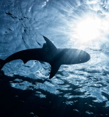 Ocean's Beast - Kevin Dodge Photography