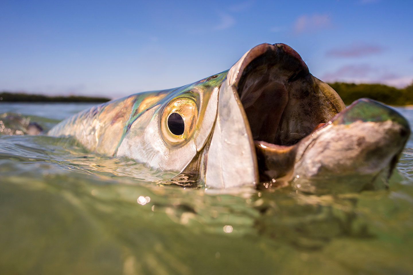 Ocean Predators: 20 Dazzling Photos by Kevin Dodge in Sport Fishing Magazine